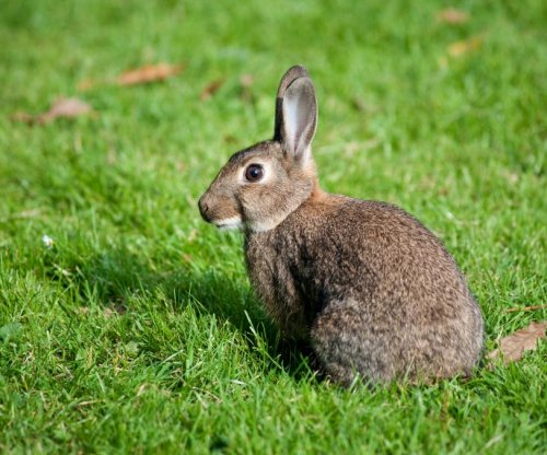 Austrian teacher receives warning after killing rabbits in front of class