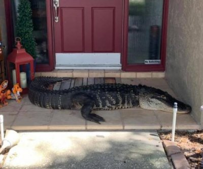 Alligator with missing limbs shows up on Florida family's porch