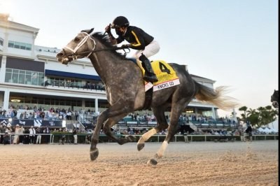 Knicks Go wins Pegasus, Caddo River joins Kentucky Derby picture