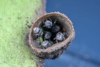 Common bee disease spread through flowers