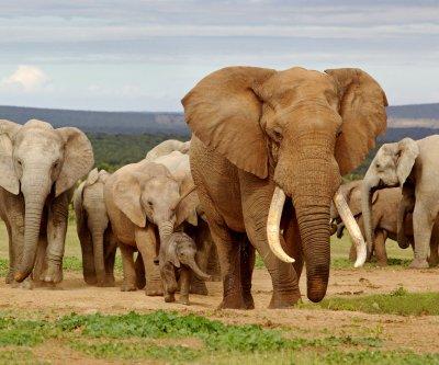 "Elephant population on ""catastrophic"" decline in Tanzania"
