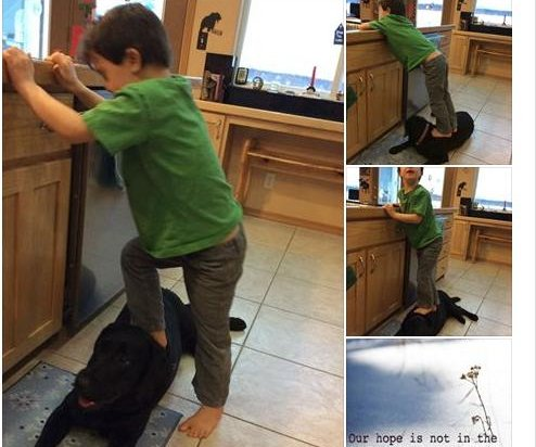Sarah Palin's son uses dog as step stool; sparks outrage
