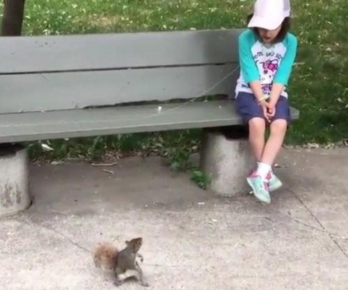 Montreal dad gets wild squirrel to pull daughter's loose tooth
