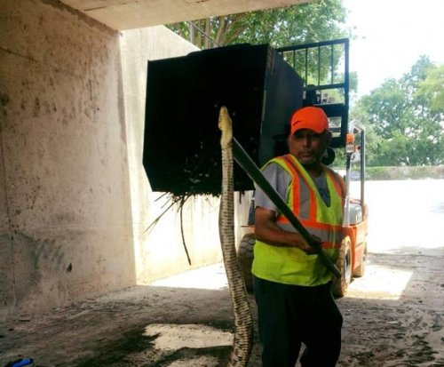 Texas city worker finds giant snake in downtown tunnel