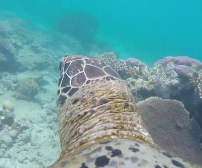 Watch from a sea turtle's perspective as it swims through Great Barrier Reef