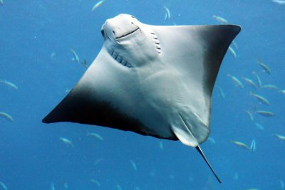 Singapore Underwater World diver killed by stingray