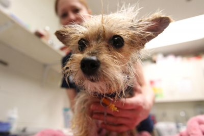 N.J., other states say 'predatory' pet leases harmful to owners, animals
