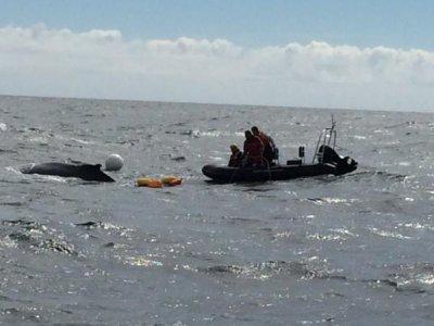 Humpback whale rescued off Maine coast