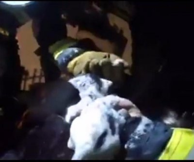 Helmet cam records firefighters' kitten rescue from California blaze