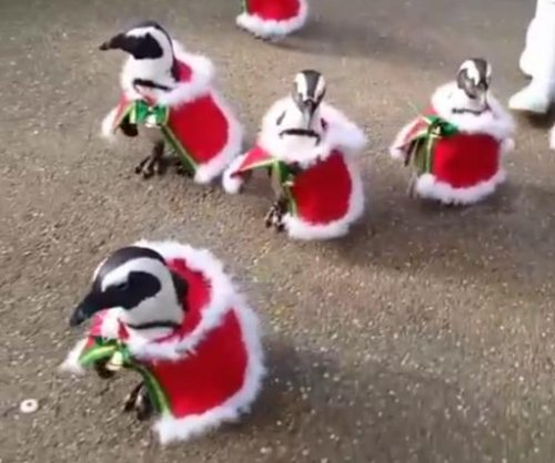 March of the Santa penguins welcomes Christmas to Japanese park