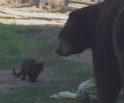Feral cat wanders into zoo, becomes best friends with bear