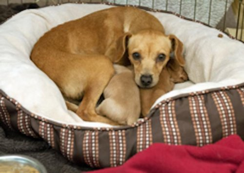 Puppies trapped under classroom during storm reunite with their mother