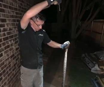 Oklahoma man discovers nearly 7-foot snake in his dryer vent