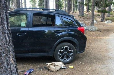 Bear breaks through window of parked vehicle to eat trash