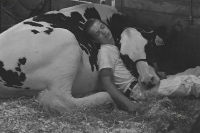 Teen takes nap with prize cow at Iowa State Fair