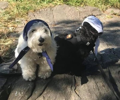 Jewish group hosts 'Yiddish for Dogs' class in New York