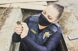 Animal control officer uses phone to rescue ducklings from storm drain