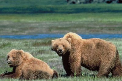 Wyoming officials kill 2 grizzly bears who mauled hunter to death