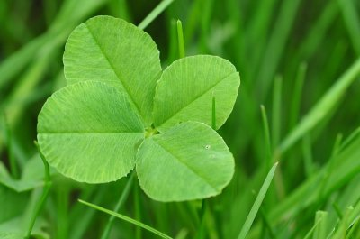North Carolina man collects 228 four-leaf clovers in under two hours