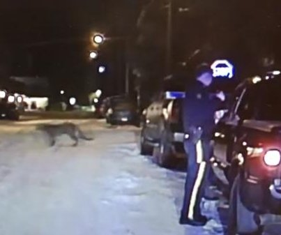 Officer's dash cam captures unexpected cougar crossing