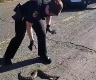 California coroner struggles with dead snake in the road