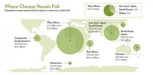 Study: China fish catch underreported