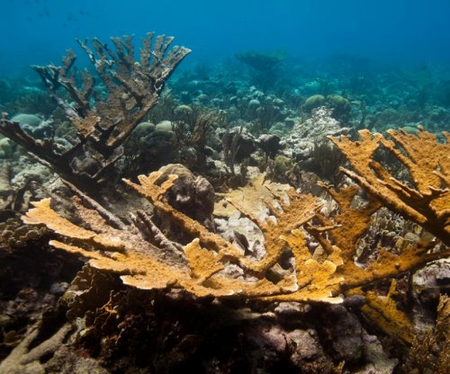Lab-bred corals reproduce in the wild, a first