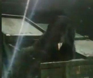 Bear goes dumpster diving at Tennessee gas station