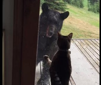Alaskan black bear falls off porch when confronted by 'fraidy-cat'