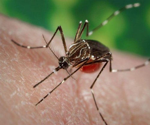 Scientists create mosquitoes resistant to dengue virus