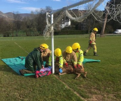 Firefighters free stag with antlers caught in soccer net