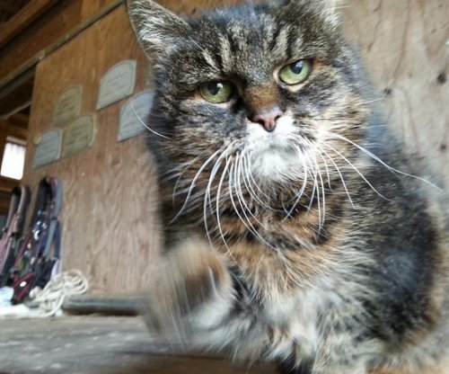 At 29, Swedish cat may be world's oldest