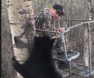Bear joins young hunter in tree stand