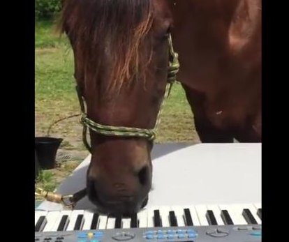 Rescue horse plays piano at Australian farm