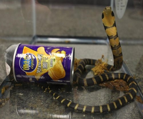 Man arrested after king cobras shipped in chip cans