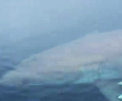 Great white shark circles father and son's fishing boat in Florida