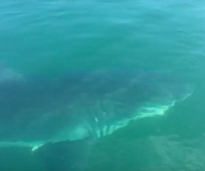 Father and son witness great white shark in Massachusetts