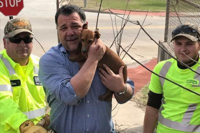 City workers in Missouri break sidewalk to rescue dachshund
