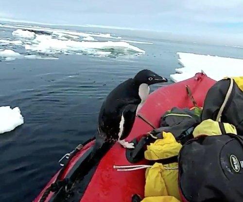 Penguin hops onboard researchers' boat in Antartica