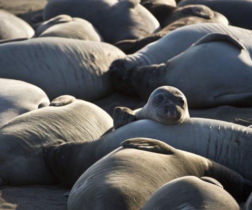 Molted elephant seal skin leeching mercury into coastal waters