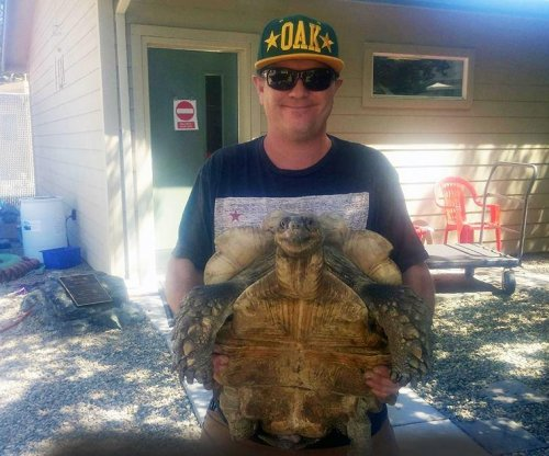 Escaped pet tortoise returned due to Facebook post