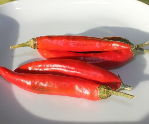 Eating hot chili peppers linked to decreased mortality: Study