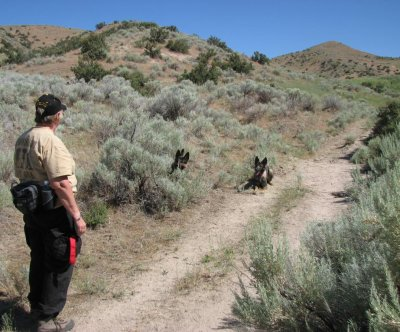 Cadaver dogs to search for Gold Rush-era graves near Oregon, Calif. trails