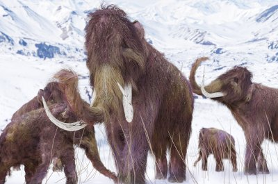 Abrupt climate change killed off mammoths