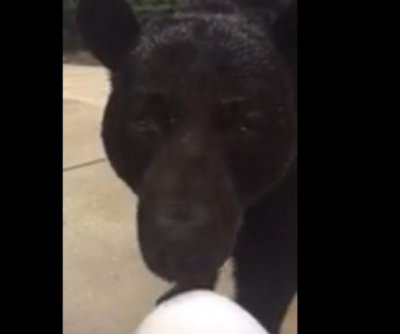 Florida wildlife officials release knee-sniffing bear video as warning to public