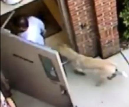 Coyote follows doctor into South Carolina clinic, chases him back out