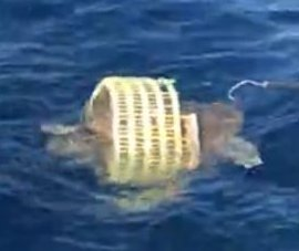 Fishing friends rescue sea turtle from plastic basket