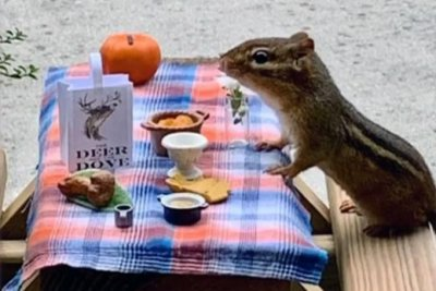 Georgia food writer creates chipmunk restaurant on front porch