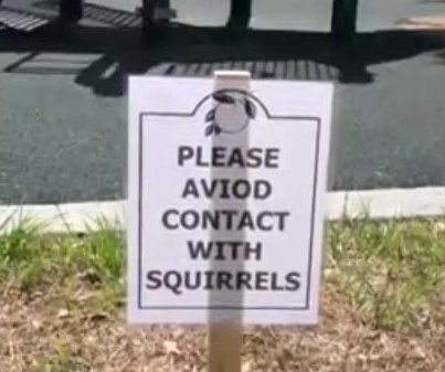Visitors to Florida park warned to avoid aggressive squirrels