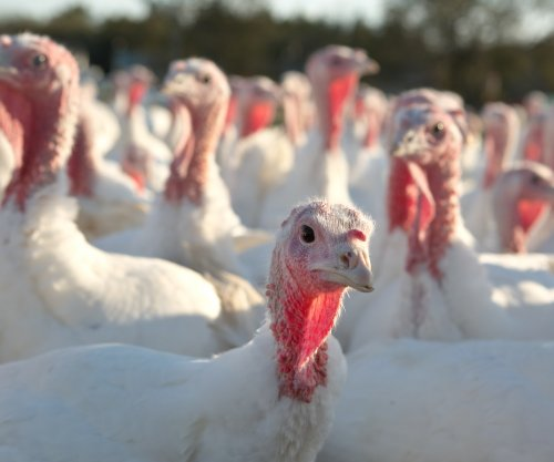 Minnesota declares state of emergency over bird flu